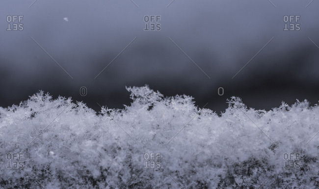 Close-up of snowflakes on field
