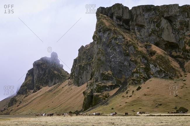 Icelandic horses on field against mountain