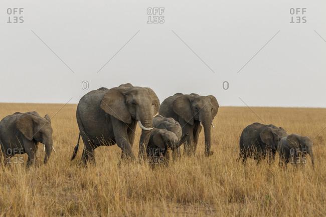 Elephants standing on grassy field against sky