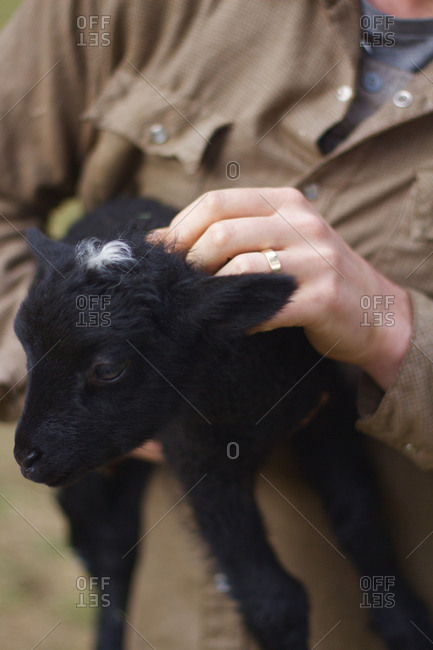 Close up of man holding a baby goat