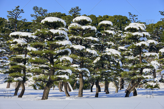 Tokyo Imperial Palace garden trees covered in snow, Tokyo, Japan