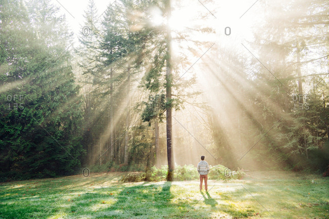 Rear view of man looking at sunlight through trees in forest, Bainbridge, Washington, United States