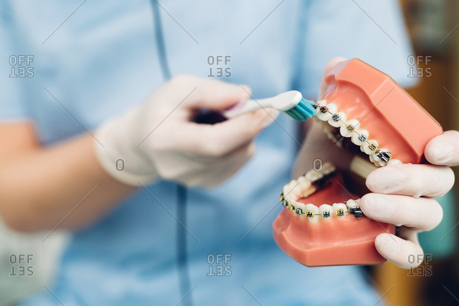 Dentist cleaning false teeth with toothbrush, mid section, close-up