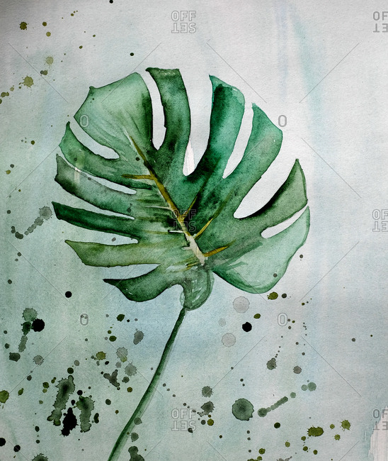 Watercolor illustration of a monster leaf