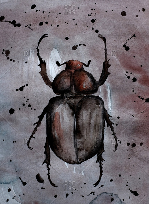 Illustration of a beetle