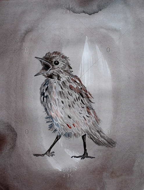 Watercolor illustration of a bird