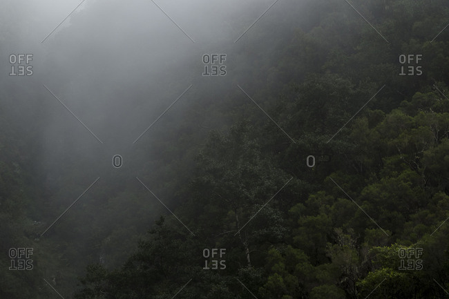 Foggy mountainside forest along Levada of Caldeirao Verde