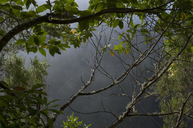 Shaded view through tree branches along Levada of Caldeirao Verde