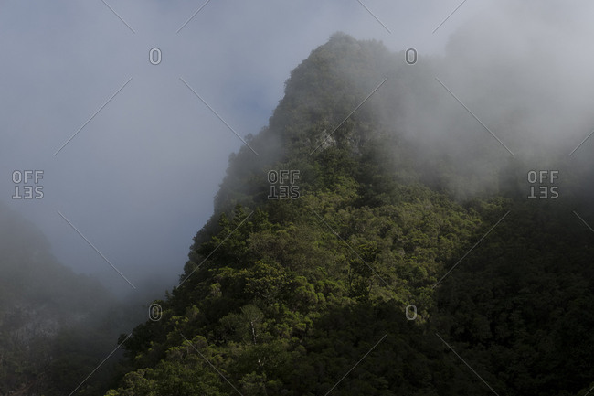 Foggy wooded mountain peak in Laurissilva forest