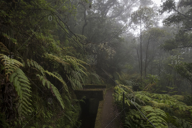 Mossy fenced walkway on foggy Pinaculo and Folhadal trek