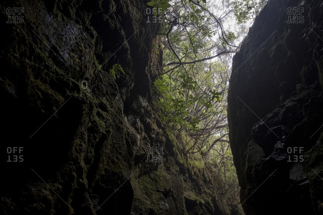 Narrow forest passageway along Pinaculo and Folhadal trek