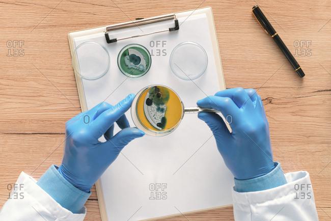 Laboratory technician analyzing petri dish