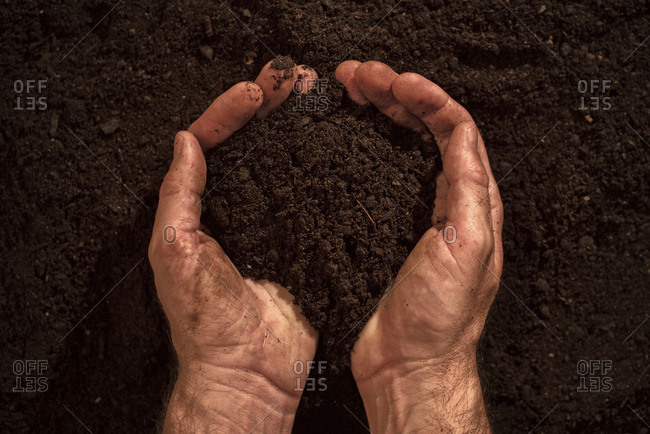 Soil in male gardener's hands