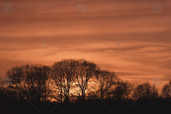 Silhouette of bare winter trees under orange coloured sky at sunset.