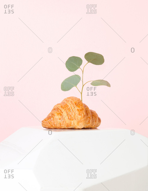 Quirky still life of plant growing out of a croissant