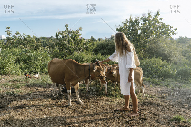 Woman petting cows on a farm