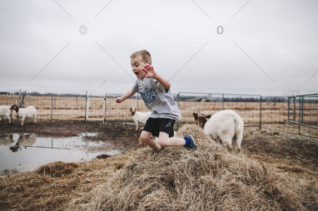 A boy playing in a goat pen
