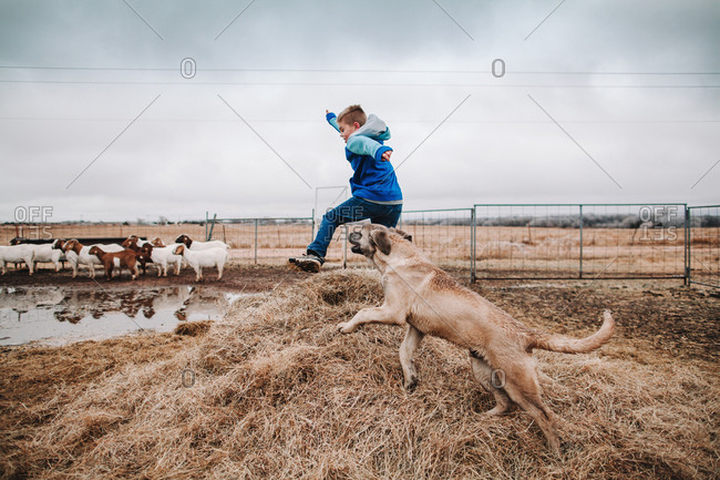 A boy jumping in a goat pen