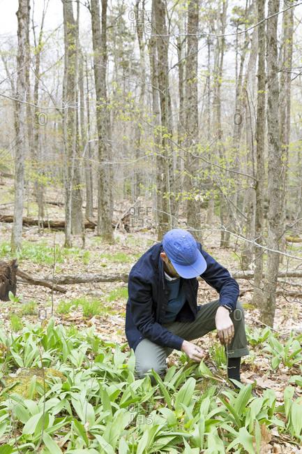 Organic farmer kneeling over plants in upstate New York