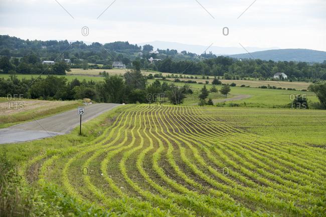 New corn fields in North Ferrisburgh, Vermont