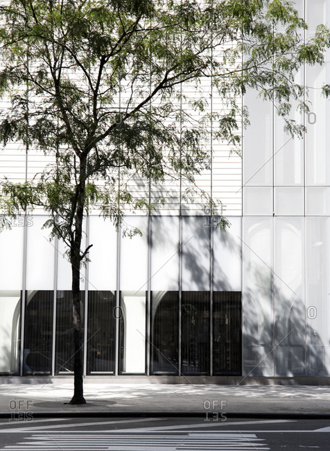 Tree on sidewalk casting shadow on facade of sleek commercial building