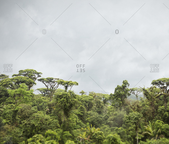 Elevated view of rainforest canopy in Braulio Carrillo National Park in Costa Rica