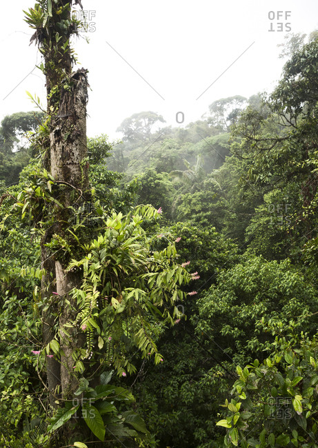 View of the lush vegetation at treetop level in Braulio Carrillo National Park in Costa Rica