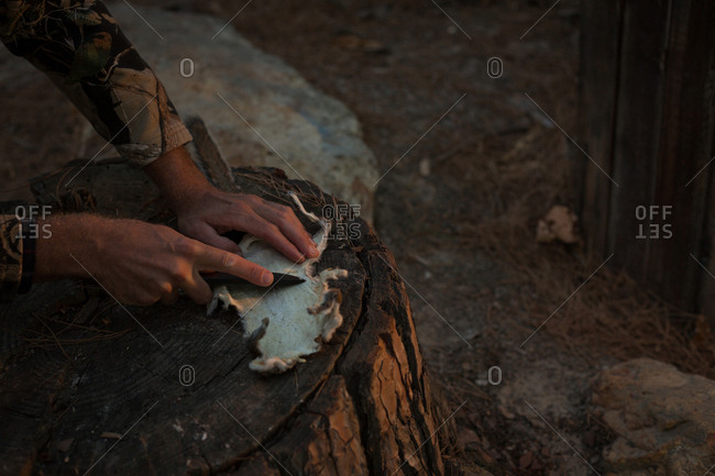 Man cutting animal fur with knife on tree stump in forest