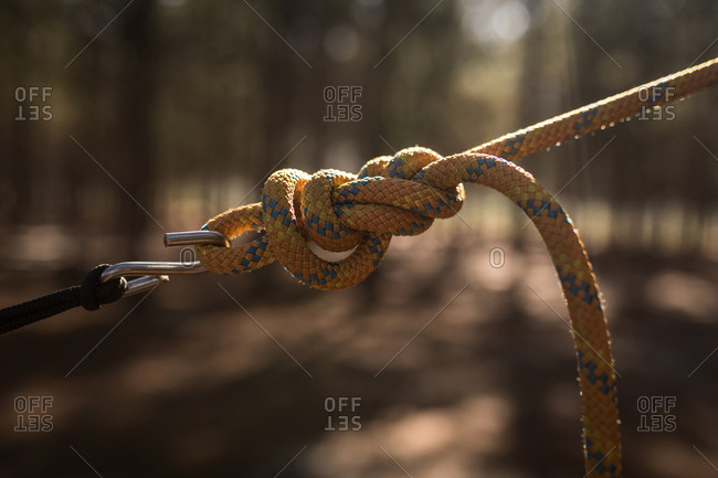 Close-up of tied hammock strap in forest