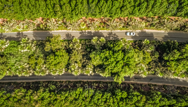 Aerial view of a car driving on a road surrounded with vegetation in Dubai, U.A.E.