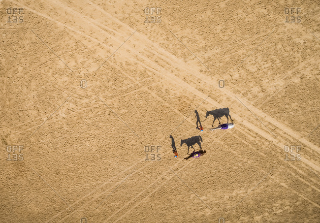 Aerial view of two rider with their camel walking on the track in Ras Al Khaimah desert, U.A.E.