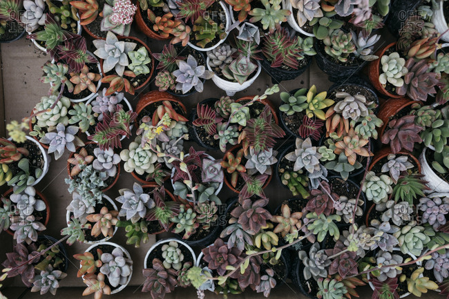 Small colorful cacti in planters from above