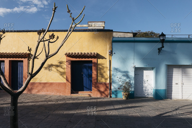 Oaxaca City, Mexico - January 22, 2018: Leafless tree casting shadows on vibrant two-toned painted buildings