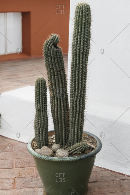 Lean cactus in pot against exterior stucco wall