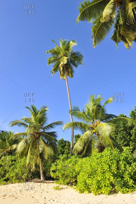 Takamaha beach on the island of Mahe, Seychelle