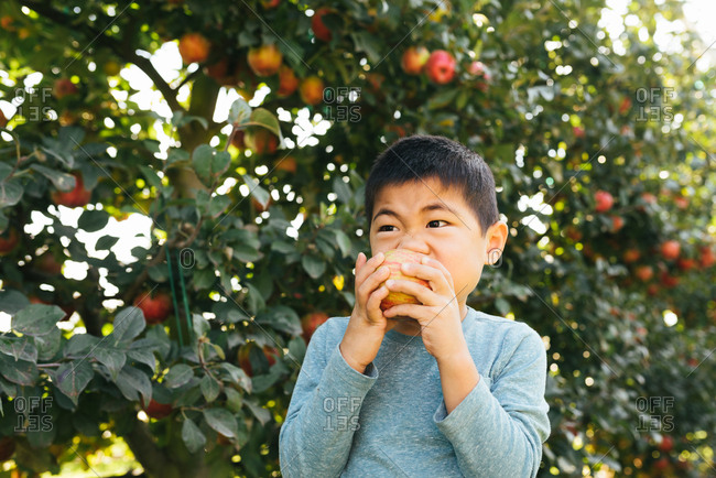 Young Chinese boy biting into apple he picked himself in orchard