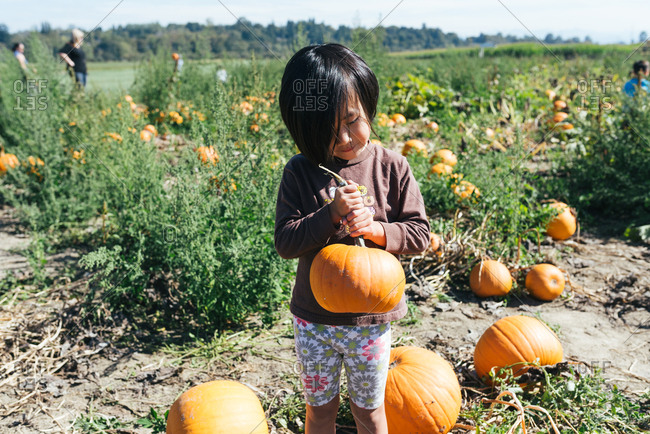 Little girl of Chinese ethnicity holding pumpkin she picked in pumpkin patch