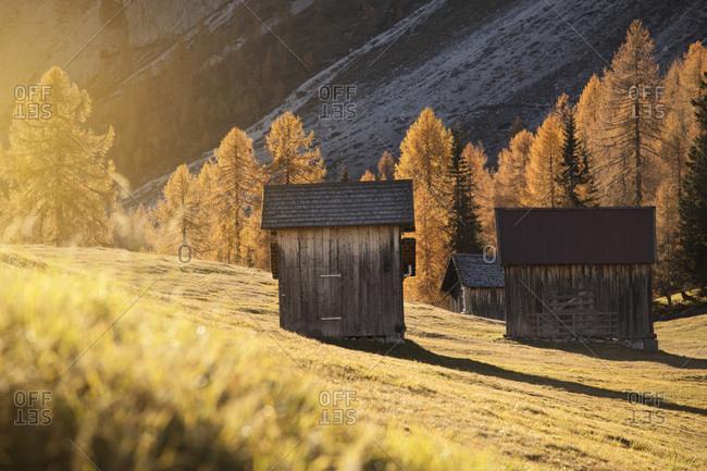 Barns in the field of Croda Rossa during an autumn morning, Sesto, Pusteria Valley, Trentino Alto Adige, Italy