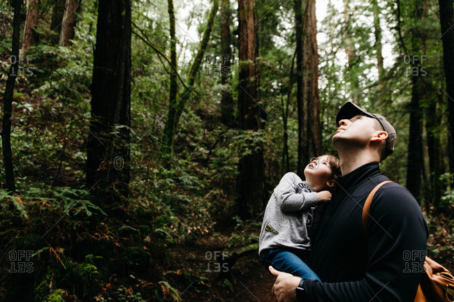 Father and toddler looking up at redwoods