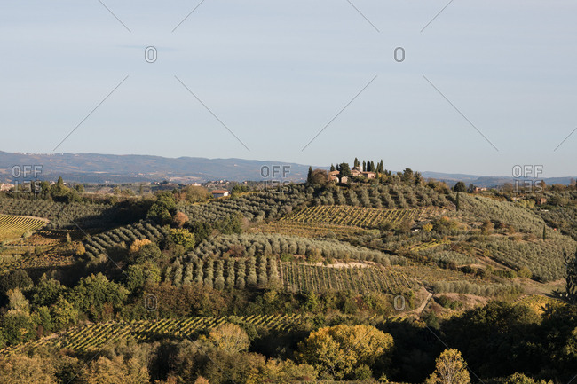 An autumn scene near San Gimignano in Tuscany, Italy, showing vine foliage and olive trees and a hilltop property