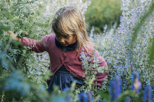 Cute little girl walking amidst flowering plants at farm