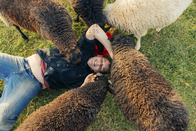 High angle view of sheep licking happy boy lying on field
