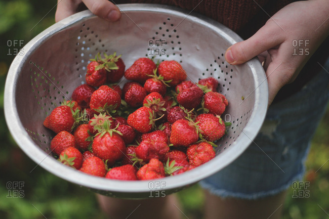 Pioneer woman holds strainer full of fresh farm strawberries