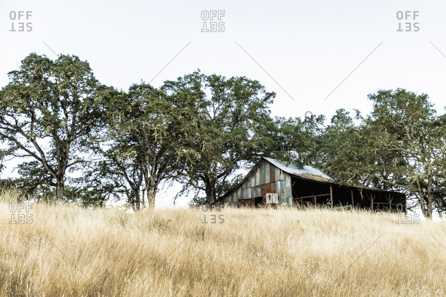 A weather beaten barn surrounded by trees on grassy hill in Northern California