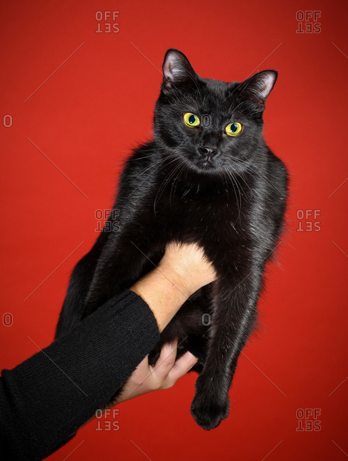 Black cat with yellow eyes held up against a vivid red backdrop