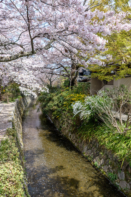 Shallow canal in secluded Japanese garden