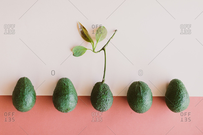 Avocados in a row on a colorful background