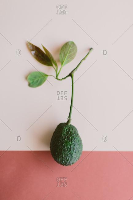 Single avocado on colorful background