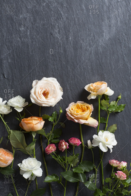 Top view of several types of single stem roses
