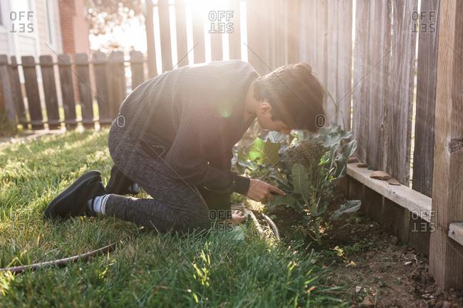 Teen boy kneeling on ground checking broccoli garden
